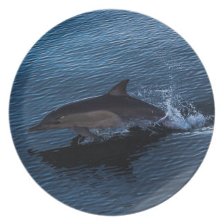 Dolphin Playing off Surfers Paradise Plates