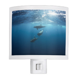 Dolphin pod swimming underwater nite lights