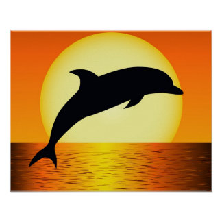 Dolphin Sunset Poster