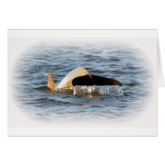 Dolphin Tail Card