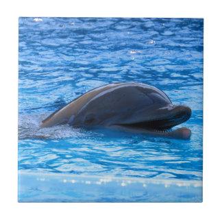 Dolphin Tiles