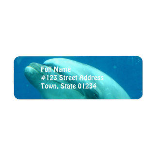 Dolphin Underwater Return Address Label
