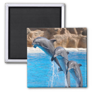 Dolphin Water Beach Tropical Paradise Island Fish Magnet