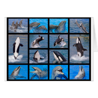 Dolphins and killer whales card