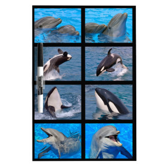 Dolphins and killer whales dry erase white board