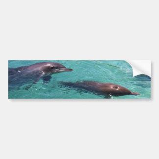 Dolphins Bumper Sticker