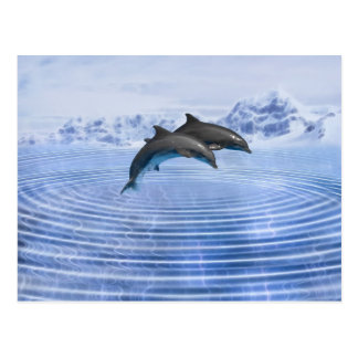 Dolphins in the clear blue sea postcard