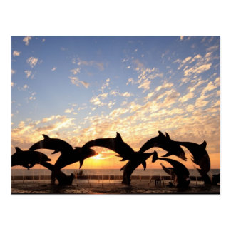 Dolphin's jumping from the water at sunset postcard