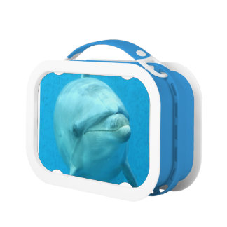 Dolphins Lunch Box