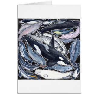 Dolphins, orcas, belugas and narvales card
