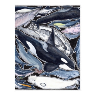 Dolphins, orcas, belugas and narvales postcard