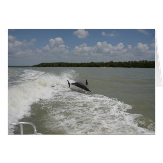 Dolphins surfing in the wake of the boat card