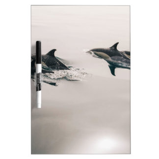 Dolphins Swimming Dry-Erase Whiteboards