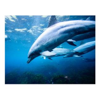 Dolphins Underwater Postcard