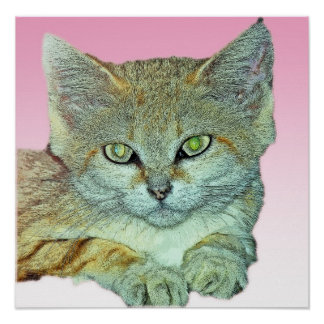 Domestic Cat, Pink Background Posters