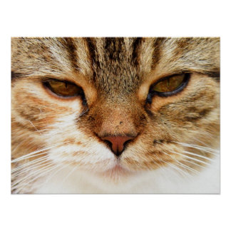 Domestic Cat Posters