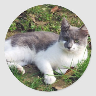 Domestic cat round sticker