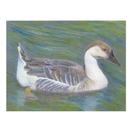Domestic Goose Fine Art Animal Postcard