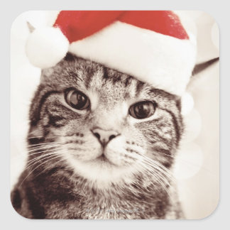 Domestic tabby cat wearing red Christmas hat Square Sticker