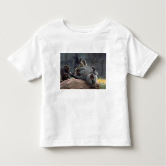 Dominant male Hamadryas baboon being groomed, T Shirt