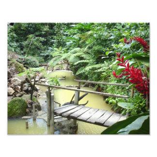 Dominica Sulpher pools Photo Print