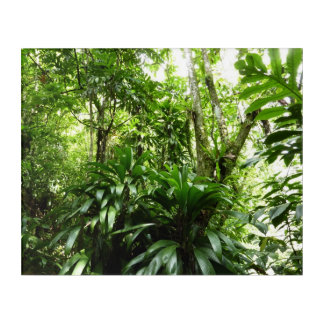 Dominican Rain Forest I Tropical Green Nature Acrylic Wall Art