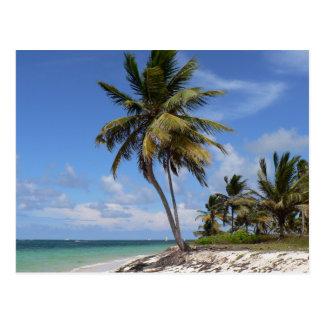 Dominican Republic beach Postcard