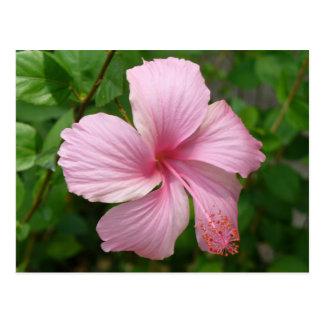 Dominican Republic flower Postcard