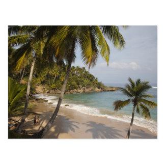 Dominican Republic, North Coast, Abreu, Playa 3 Postcard