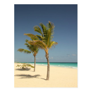 Dominican Republic Tropical Beach Postcard