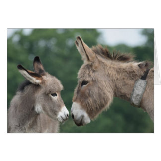 Donkey and foal card