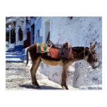Donkey, Fira Santorini, Greece Post Card