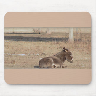 Donkey Photo Mouse Pad