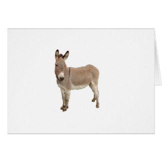 Donkey Photograph Design Card