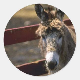 Donkey Round Sticker