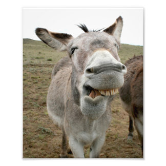 Donkey Silly Face Photo Print