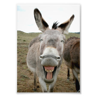Donkey Smile Photo Print