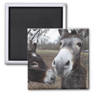 Donkey! Square Magnet