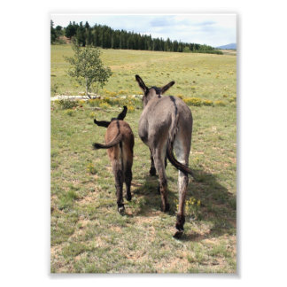 "Donkey ""Tales"" Photo Print"
