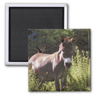 Donkeys at Pasture Magnet