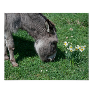 Donkeys Don't Eat Wild Daffodils Perfect Poster