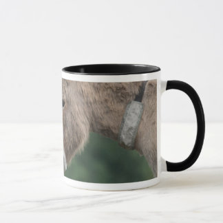Donkeys nose-to-nose mug