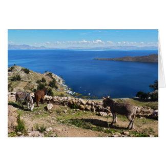 Donkeys' paradise card