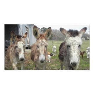 Donkeys Photograph