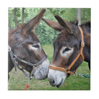 Donkeys touching noses tile
