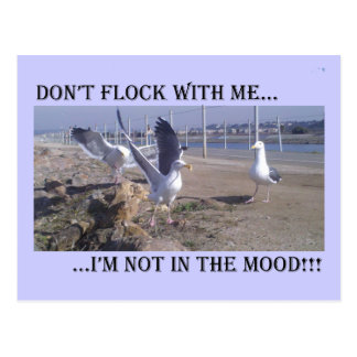 Don't Flock With Me Postcard
