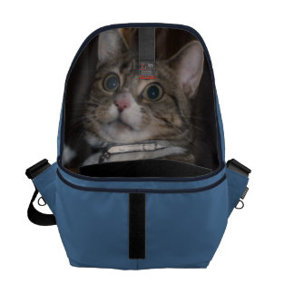 don't let the cat out of the bag Messenger Bag