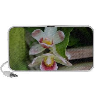 Doodle Speaker - Fan Shaped Orchid