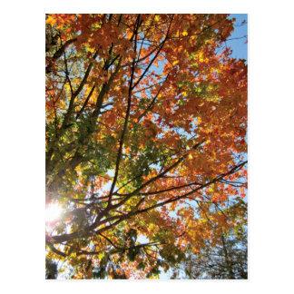 Door County Fall Postcard
