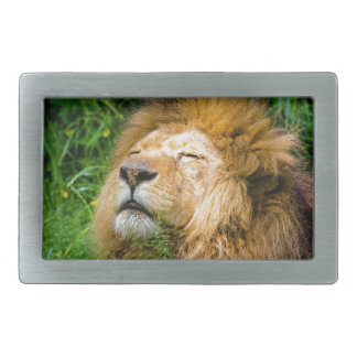Dope Lion in the grass Belt Buckles